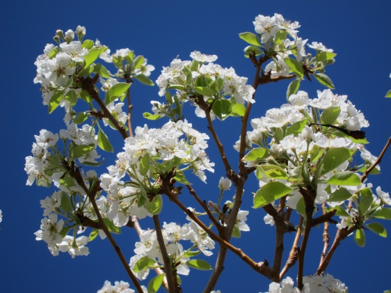 Flowers in bloom against a blue sky